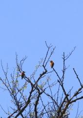 Ptic-Cebelar-Bizeljsko-2021-2