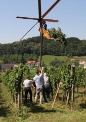 Društvo vinogradnikov Bizeljsko (18)