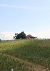 Ekskurzija-Drustva-vinogradnikov-2021-10