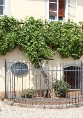 Ekskurzija-Drustva-vinogradnikov-2021-91