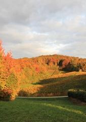 Jesen-med-vinogradi-Bizeljsko-2020-10