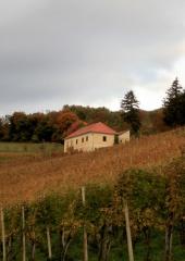 Jesen-med-vinogradi-Bizeljsko-2020-12