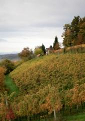 Jesen-med-vinogradi-Bizeljsko-2020-13