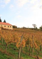 Jesen-med-vinogradi-Bizeljsko-2020-14