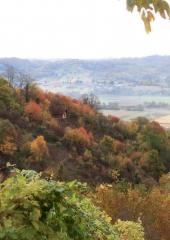 Jesen-med-vinogradi-Bizeljsko-2020-15