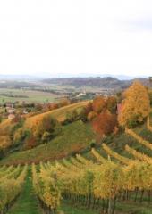 Jesen-med-vinogradi-Bizeljsko-2020-16