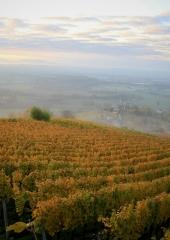 Jesen-med-vinogradi-Bizeljsko-2020-17