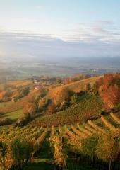 Jesen-med-vinogradi-Bizeljsko-2020-18