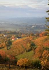 Jesen-med-vinogradi-Bizeljsko-2020-19
