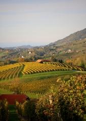 Jesen-med-vinogradi-Bizeljsko-2020-2