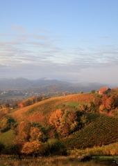 Jesen-med-vinogradi-Bizeljsko-2020-20