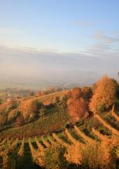 Jesen-med-vinogradi-Bizeljsko-2020-21