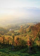 Jesen-med-vinogradi-Bizeljsko-2020-22