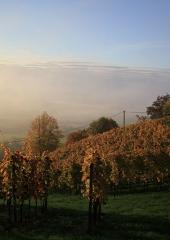 Jesen-med-vinogradi-Bizeljsko-2020-23