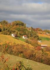 Jesen-med-vinogradi-Bizeljsko-2020-25