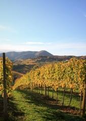 Jesen-med-vinogradi-Bizeljsko-2020-26