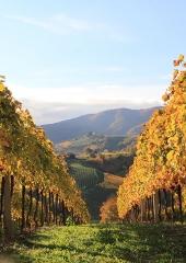 Jesen-med-vinogradi-Bizeljsko-2020-27