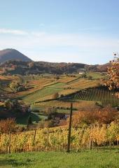 Jesen-med-vinogradi-Bizeljsko-2020-28