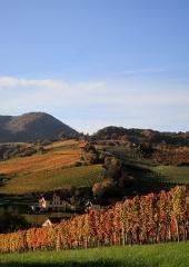 Jesen-med-vinogradi-Bizeljsko-2020-29