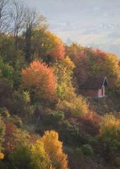 Jesen-med-vinogradi-Bizeljsko-2020-3