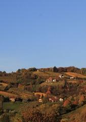 Jesen-med-vinogradi-Bizeljsko-2020-30