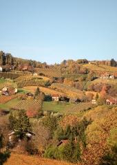 Jesen-med-vinogradi-Bizeljsko-2020-31