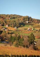 Jesen-med-vinogradi-Bizeljsko-2020-32