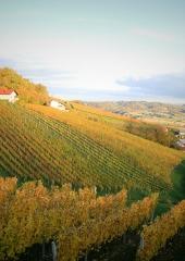 Jesen-med-vinogradi-Bizeljsko-2020-33