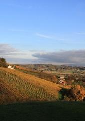 Jesen-med-vinogradi-Bizeljsko-2020-34