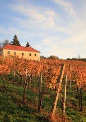 Jesen-med-vinogradi-Bizeljsko-2020-36