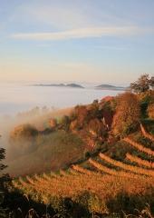 Jesen-med-vinogradi-Bizeljsko-2020-37