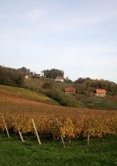 Jesen-med-vinogradi-Bizeljsko-2020-38