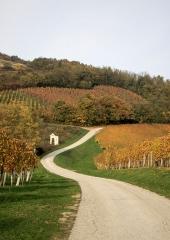 Jesen-med-vinogradi-Bizeljsko-2020-39
