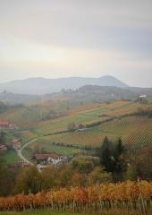 Jesen-med-vinogradi-Bizeljsko-2020-40