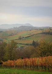 Jesen-med-vinogradi-Bizeljsko-2020-41