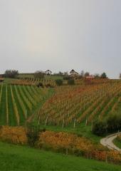 Jesen-med-vinogradi-Bizeljsko-2020-42