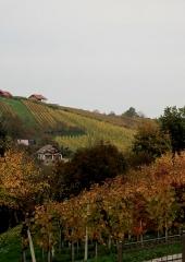 Jesen-med-vinogradi-Bizeljsko-2020-43