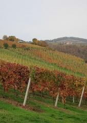 Jesen-med-vinogradi-Bizeljsko-2020-44