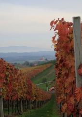 Jesen-med-vinogradi-Bizeljsko-2020-45