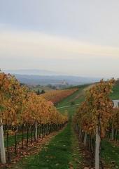 Jesen-med-vinogradi-Bizeljsko-2020-46