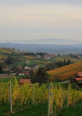 Jesen-med-vinogradi-Bizeljsko-2020-47