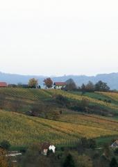 Jesen-med-vinogradi-Bizeljsko-2020-48