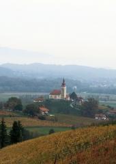 Jesen-med-vinogradi-Bizeljsko-2020-49