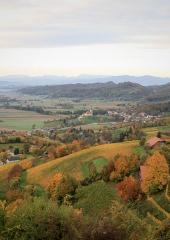 Jesen-med-vinogradi-Bizeljsko-2020-5