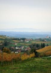 Jesen-med-vinogradi-Bizeljsko-2020-50