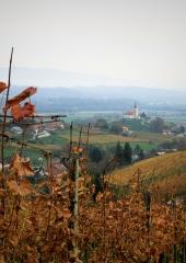 Jesen-med-vinogradi-Bizeljsko-2020-51