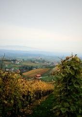 Jesen-med-vinogradi-Bizeljsko-2020-52