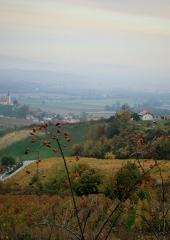 Jesen-med-vinogradi-Bizeljsko-2020-53