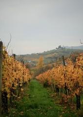 Jesen-med-vinogradi-Bizeljsko-2020-54