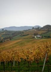 Jesen-med-vinogradi-Bizeljsko-2020-55